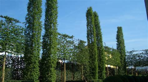 Moderner Sichtschutz Im Garten 2296 by Gruner Sichtschutz Im Garten Siddhimind Info