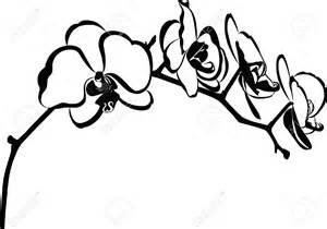 Orchid Clipart Black And White  ClipartFest sketch template