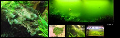 Lu Uv Buat Aquarium jenis jenis algae 1 aquascape indonesia koeng