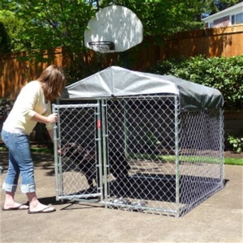kennels at petsmart lucky chain link kennel petsmart mini