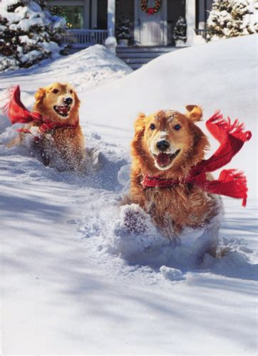 golden retrievers  snow funny humorous dog christmas card  avanti press