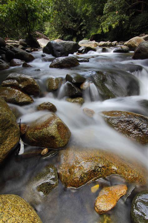 Rana Hijau Daun gambar pemandangan pohon alam hutan batu air terjun