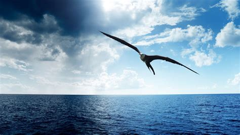 l albatro testo l albatros charles baudelaire poesia