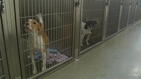 franklin county dogs more deaf dogs at franklin county shelter than before wsyx