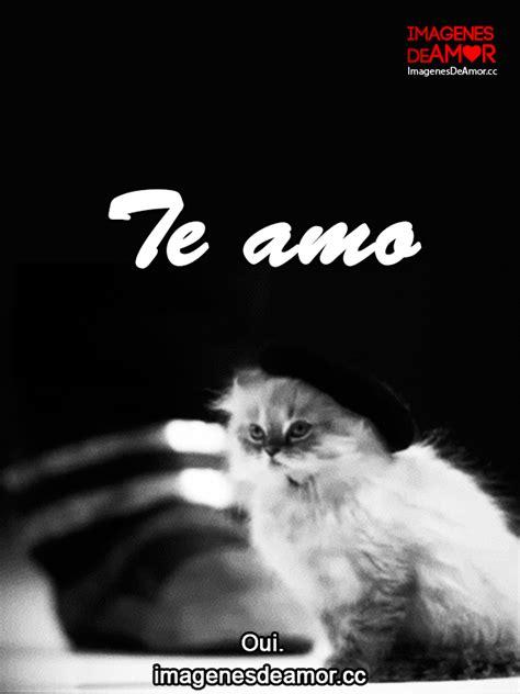 imagenes gif de amor con fraces im 225 genes de amor con movimiento 5 gif de gatos graciosos