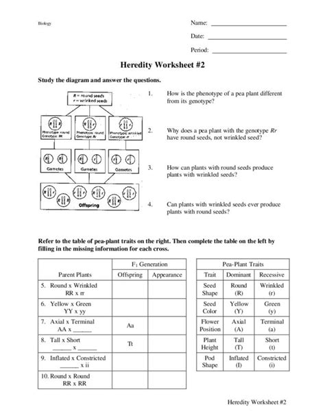 Heredity Worksheet by Heredity Worksheets Wiildcreative