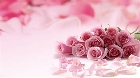 themes rose free download free pink wallpapers for desktop wallpaper cave
