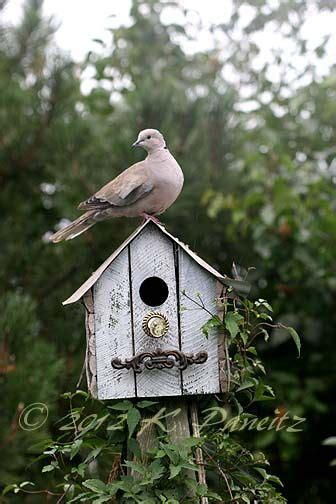 dove on birdhouse bird houses pinterest house