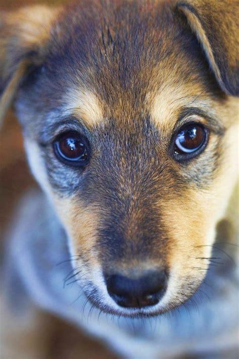 puppy eye puppy www imgkid the image kid has it