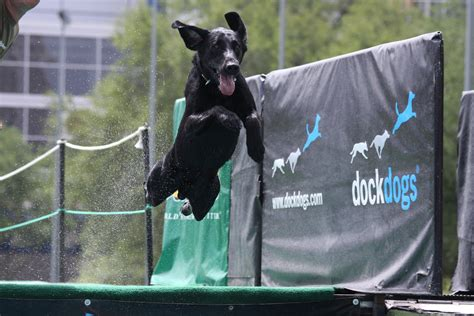 dock dogs free dockdogs competiton september 27 29