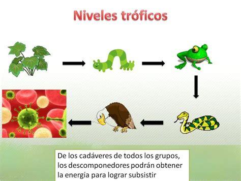 cadenas en ingles se dice la naturaleza es vida mayo 2012
