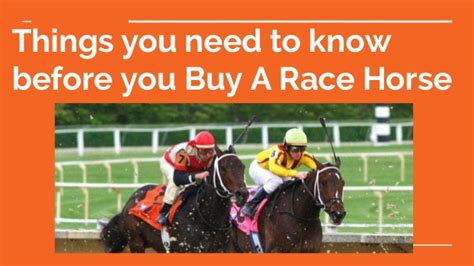 things i need to know when buying a house things you need to know before you buy a race horse