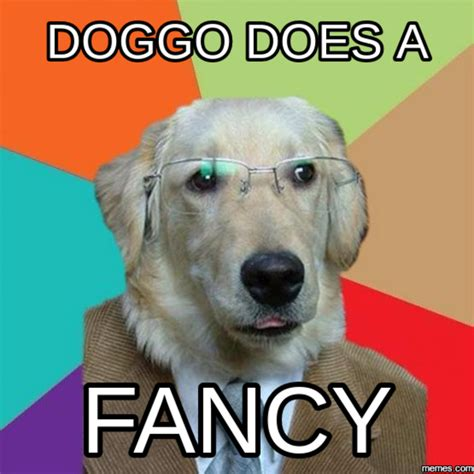 A Meme - does a fancy doggo know your meme