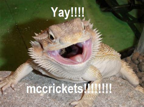 Bearded Dragon Meme - bearded dragon org view topic bearded dragon memes cute funny animal pics pinterest