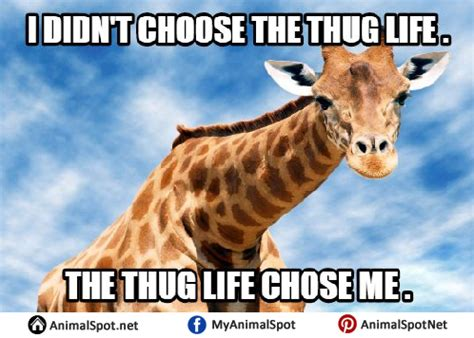 Giraffe Hat Meme - giraffe meme different types of funny animal memes