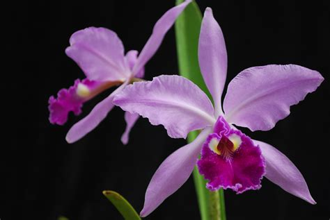 Tropical Home Decor by Cattleya Spring Backyard Flower Garden Project Holicoffee