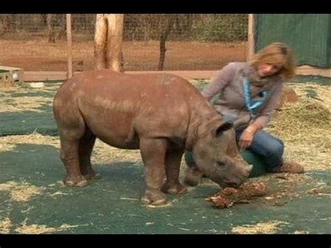 panti asuhan anak badak dibuka  afrika selatan youtube