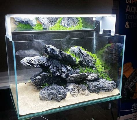 Aquascaping Cichlid Aquarium by Best 25 Malawi Aquarium Ideas On Cichlid
