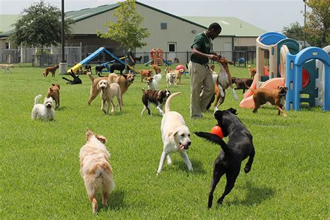 dog attack news dog daycare dog boarding and dog doggie daycare photo gallery houston katy rover oaks