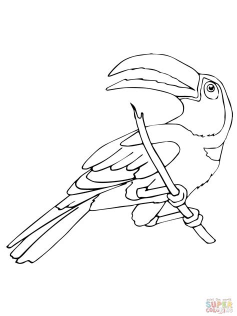 coloring page of a toucan bird free rtoon toucan coloring pages