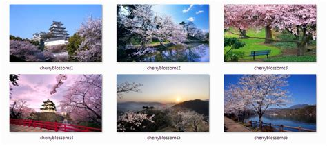 microsoft themes japan download cherry blossom windows 7 theme