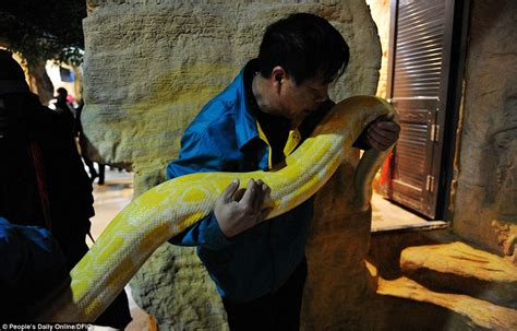 2 meters feet chinese zookeepers carry out physical exam for 15ft long