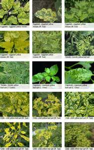 Types Of Plant Diseases - australian centre for international agricultural research