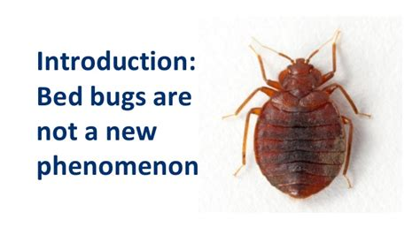 where do you find bed bugs where do you find bed bugs frequently asked questions
