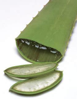 diet herbal  tanaman lidah buaya  penderita