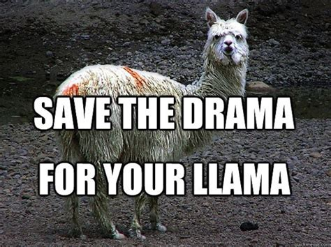 the best llama drama memes on the internet
