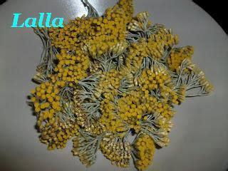 fiori di elicriso magica natura oleolito di elicriso