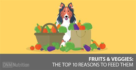 reasons  feed  dog vegetables  fruit dogs