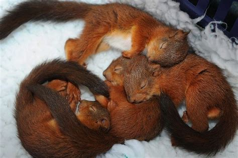 25 Adorable baby animal pictures (25 pics)   Amazing Creatures