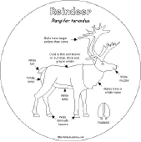 printable reindeer parts reindeer shape book printouts enchantedlearning com