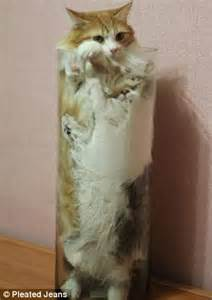 Cat Sitting On Glass Table Cruel Craze For Stuffing Your Pet Cat Into Glass Jars