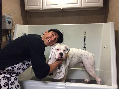 pet supplies plus wash self service wash wash n wiggle