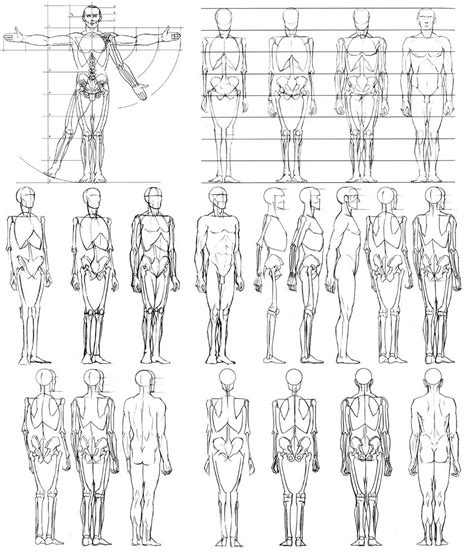 Drawing Anatomy by Sketch Human Anatomy Diy