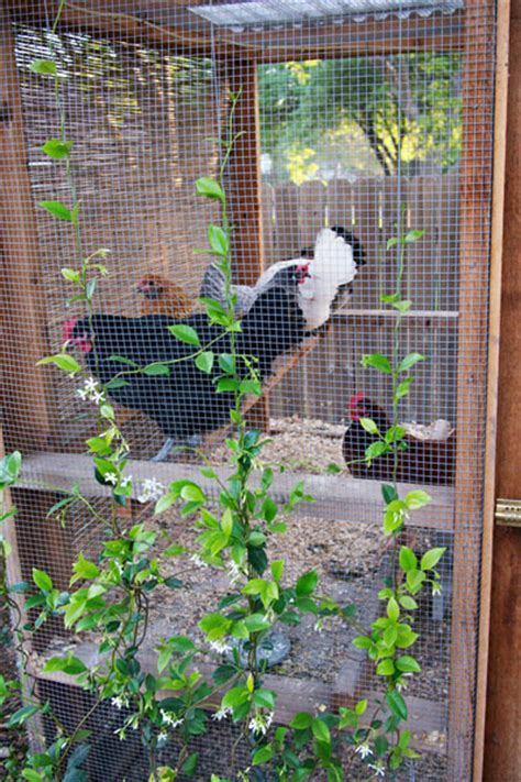 austin backyard chickens blog austin backyard chicken coop tour diy chicken coop