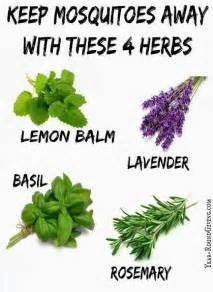 plants that keep mosquitoes away mosquito repelling plants garden ideas pinterest
