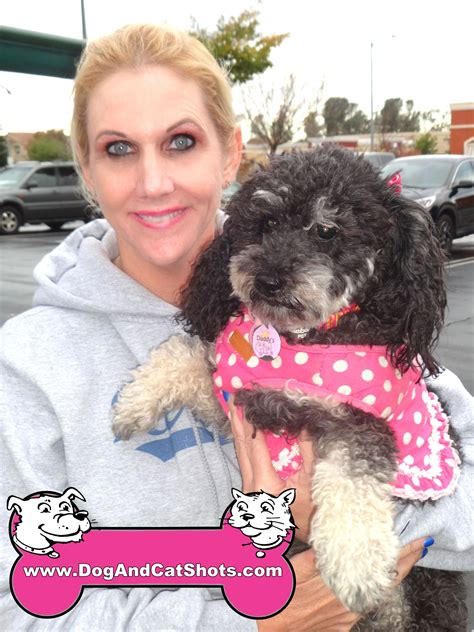 shih tzu poodle mix cost low cost and cat in northern california plum the shih tzu poodle mix visited