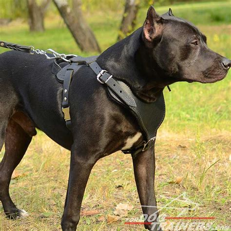 Adjustable Leather Pitbull Harness For Heavy Duty Work H8 1073 Y Shape Leather