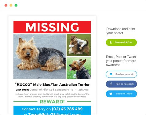 flyer design templates lost pet research recovery