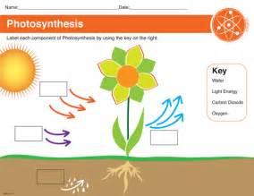 printable photosynthesis worksheet black decker laminating