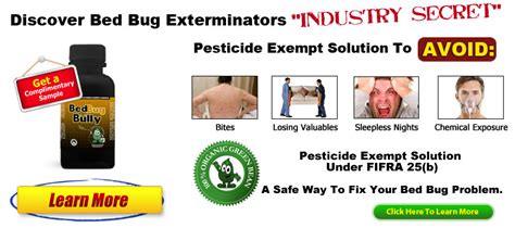 bed bug reproduction rate bed bug guide when and where to find bed bugs mycleaningproducts com