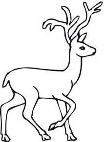 Deer Coloring Page  Clipart Panda Free Images sketch template