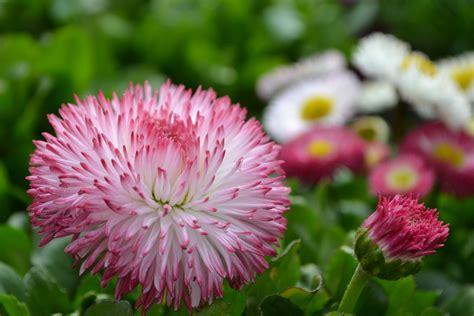 fiori della primavera tutti i fiori della primavera tagliabue il verde