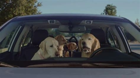 subaru commercial with kid driving car autos post subaru commercial with dogs driving 2014 autos post