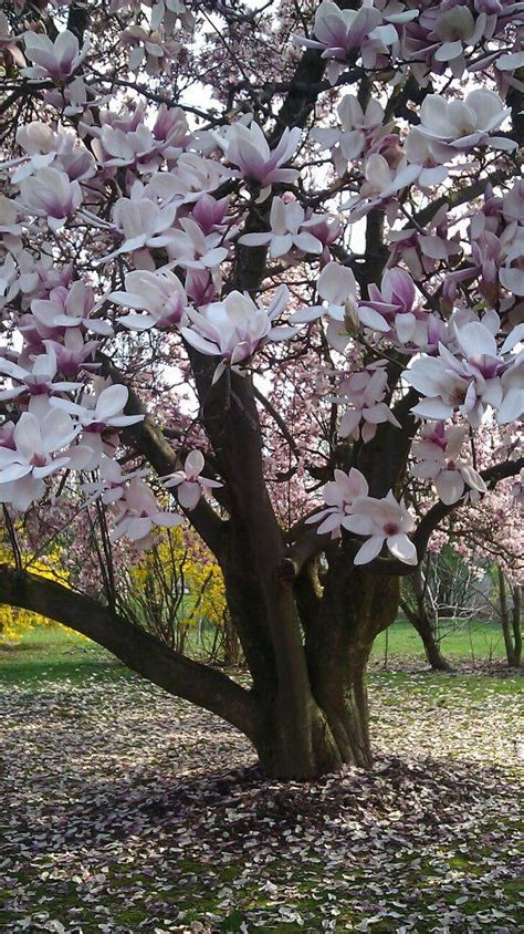 28 best think spring images on pinterest seasons of the year hello spring and spring