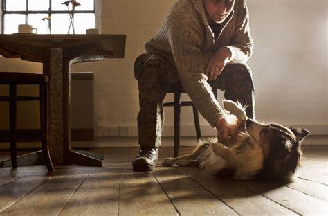 Best Flooring With Dogs Laminate Vs Engineered Wood Flooring