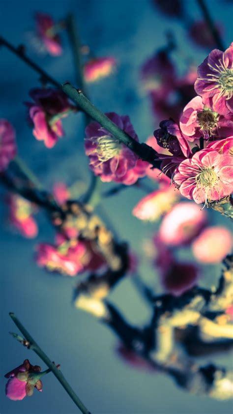imagenes flores para whatsapp los mejores fondos de pantalla gratis para whatsapp